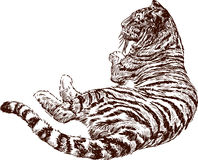 Lying tiger Royalty Free Stock Photo