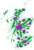 Vector image map of Scotland with thistle flowers Royalty Free Stock Images