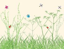 Insects in the grass on a summer meadow vector illustration