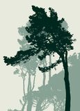 Silhouettes of the italian pines. Vector image of the mediterranean pine trees Stock Photography