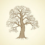 Vector image of mighty tree with bare branches Stock Photography