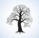 Vector image of mighty tree with bare branches Royalty Free Stock Photo