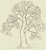 Vector image of mighty tree with bare branches. Vector monochrome hand-drawn linear image of mighty tree with bare branches Royalty Free Stock Photos