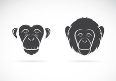 Vector image of monkey face Royalty Free Stock Image