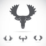 Vector image of an moose head. On a white background vector illustration