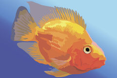 Vector image Orange aquarium fish parrot Royalty Free Stock Photography