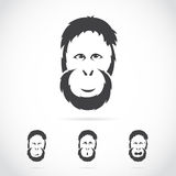 Vector image of orangutan face. On white background Royalty Free Stock Photography