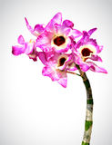 Vector image of orchid flower Stock Photos