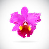 Vector image of orchid flower Stock Photography