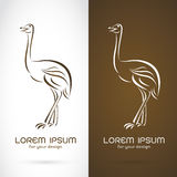 Vector image of a ostrich design Royalty Free Stock Images