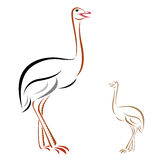 Vector image of an ostrich. On white background Royalty Free Stock Photos