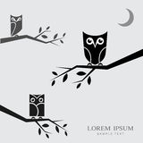 Vector image of an owls perched on branches Royalty Free Stock Photo