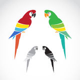 Vector image of a parrot Stock Photography