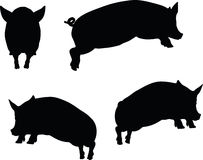 Vector Image, pig silhouette, in Jump pose, isolated on white background Stock Photography