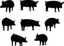 Vector Image, pig silhouette, in a standing position, isolated on white background Stock Image