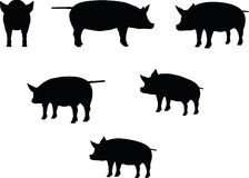 Vector Image, pig silhouette, in a standing position, isolated on white background Stock Photography