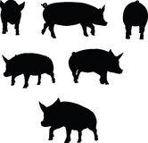 Vector Image, pig silhouette, in a trot position, isolated on white background Stock Images