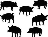 Vector Image, pig silhouette, in a walking position, isolated on white background Royalty Free Stock Photography