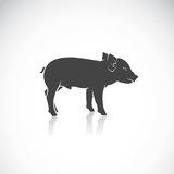 Vector image of a piglet. On white background Royalty Free Stock Images