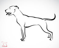 Vector image of an pitbull dog