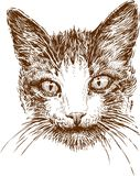 Head of cat Stock Photos