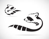Vector image of a raccoon. On white background royalty free illustration