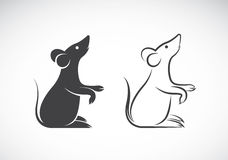 Vector image of an rat design. On white background Stock Images