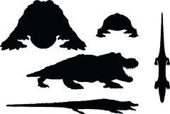 Vector Image - reptiles alligator silhouette  on white background Royalty Free Stock Photo