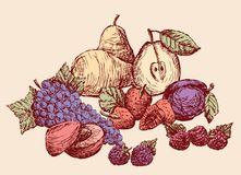 Still-life of the drawn fruit. All objects isolated Royalty Free Stock Photos