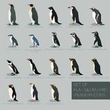 Set of flat geometric species of Penguins. Vector image of the Set of flat geometric species of Penguins Royalty Free Stock Images