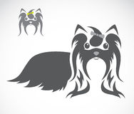 Vector image of an shih tzu dog Royalty Free Stock Image