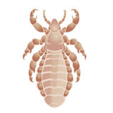 Louse Royalty Free Stock Photography