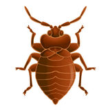 Bedbug Royalty Free Stock Image