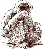 Gibbon. The vector image of a sitting monkey Stock Photos