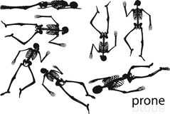 Vector Image - skeleton silhouette in prone pose  on white background Stock Photos