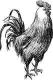 Sketch of rooster vector illustration