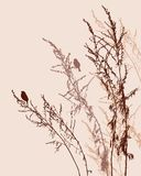 Silhouettes of birds on meadow plants Royalty Free Stock Images