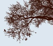 Vector image of tree branches in the cold season stock photos