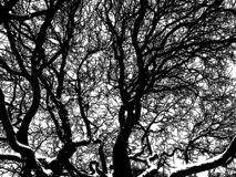 Vector image of the tree branches in winter stock images