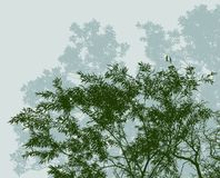 Silhouettes of deciduous trees in summer forest Royalty Free Stock Images