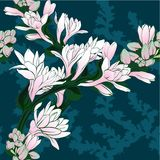 Vector image. Tuberose - branches. Medicinal, perfumery and cosmetic plants. Wallpaper. Use printed materials, signs, posters, pos. Tcards, packaging Stock Image