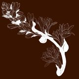 Vector image. Tuberose - branches. Medicinal, perfumery and cosmetic plants. Wallpaper. Use printed materials, signs, posters, pos. Tcards, packaging Royalty Free Stock Photos