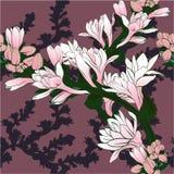Vector image. Tuberose - branches. Medicinal, perfumery and cosmetic plants. Wallpaper. Use printed materials, signs, posters, pos. Vector image. Tuberose Stock Photos