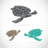 Vector image of an turtle Stock Photography