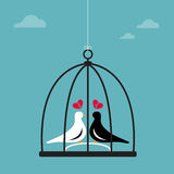 Vector image of two birds in a cage. Stock Photos