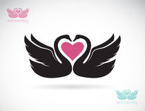 Vector image of two loving swans Stock Image