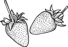 Vector drawing of the ripe strawberries Royalty Free Stock Photos