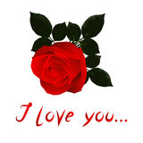 Vector Image: Valentine with red rose. Stock Photos