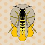 Wasp on honeycombs. Vector image of a wasp sitting on a honeycomb in a flat style Stock Photography