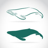 Vector image of whale Stock Image